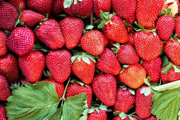 Fresas recién cosechadas