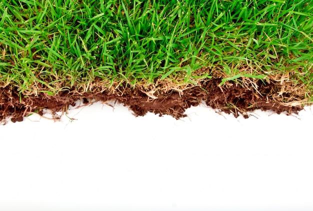 Fresca hierba verde de la primavera con el suelo aislado en el fondo blanco.