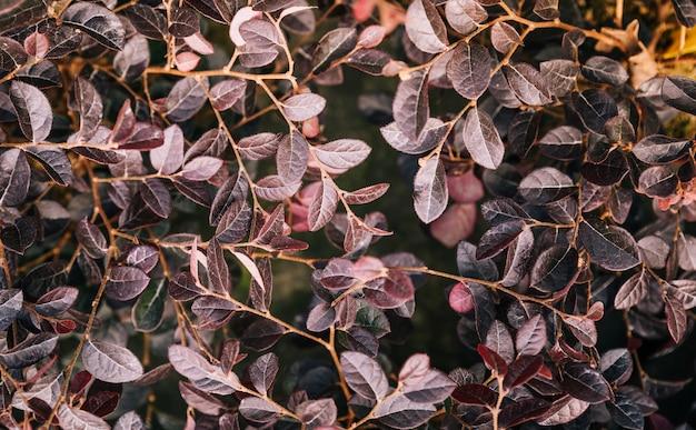 Frescura de hojas de planta ornamental como fondo natural.
