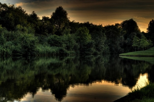 Frondoso bosque en el lago