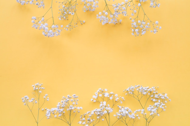 Frontera de flores blancas sobre el fondo amarillo