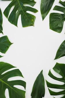Frontera hecha con hojas de monstera sobre fondo blanco