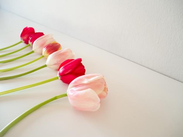 Frontera rosada hermosa de los tulipanes aislada en el fondo blanco