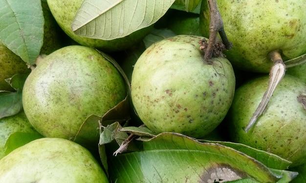 Fruta de guayaba fresca en bandeja de madera después de cosechada en la granja lista para servir o vender en el mercado