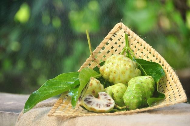 Fruta de noni (morinda citrifolia)