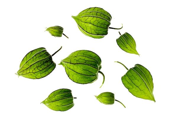 Fruta verde inmadura de physalis.