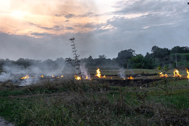 Fuego en la estepa, la hierba arde destruyendo todo a su paso.