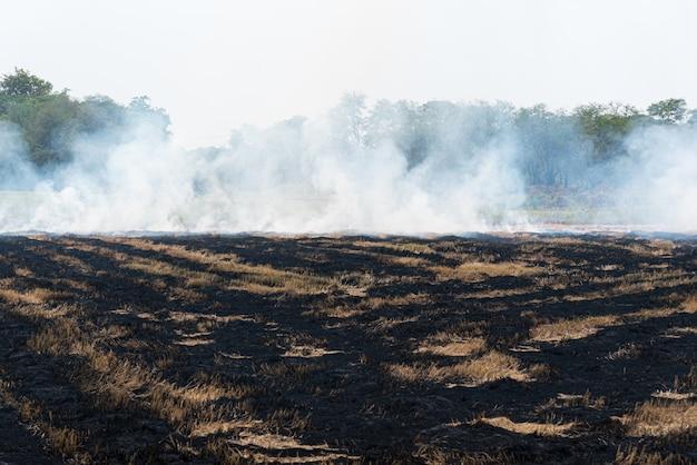 El fuego y la quema de hierba seca hacen una llama con humo, peligro.