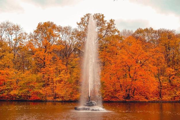 Fuente en el centro del lago cerca de la orilla del parque, donde crecen árboles.