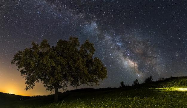 Galaxia de la vía láctea en un árbol solitario