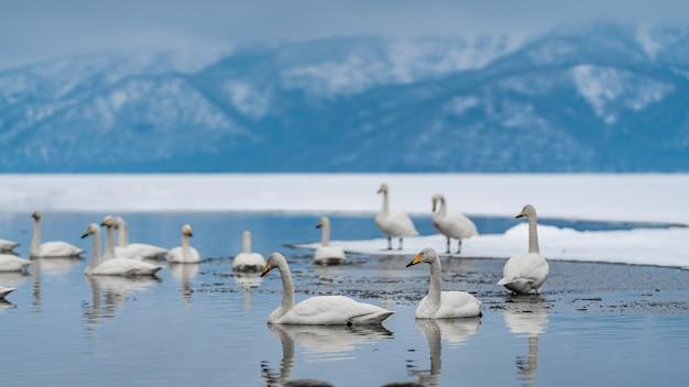Ganso en el lago de invierno