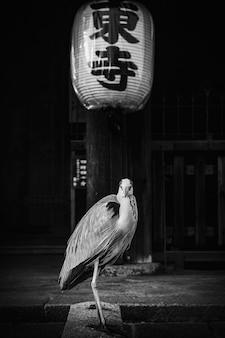 Garza china en un templo en escala de grises