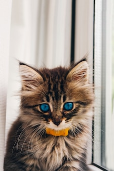 Gatita de ojos azules