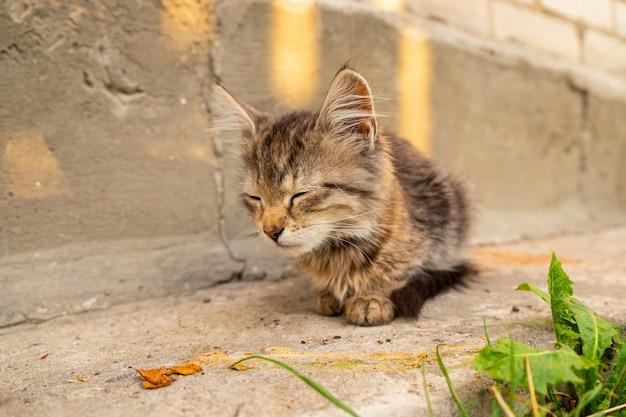 Gatito atigrado sentado en la calle, mascota jugando en el patio.