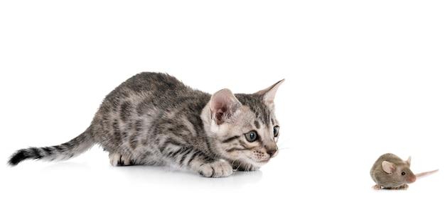 Gatito de bengala y ratón