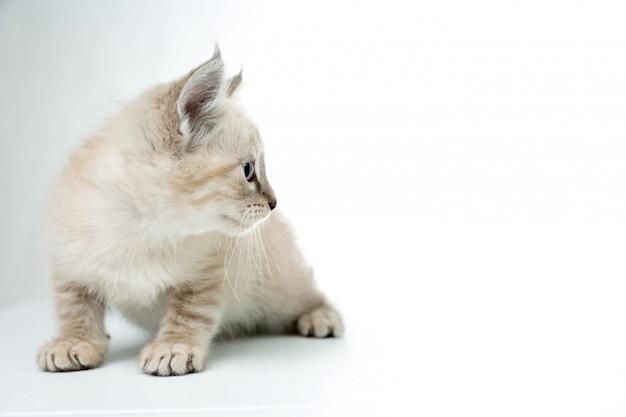 Gatito en blanco aislado