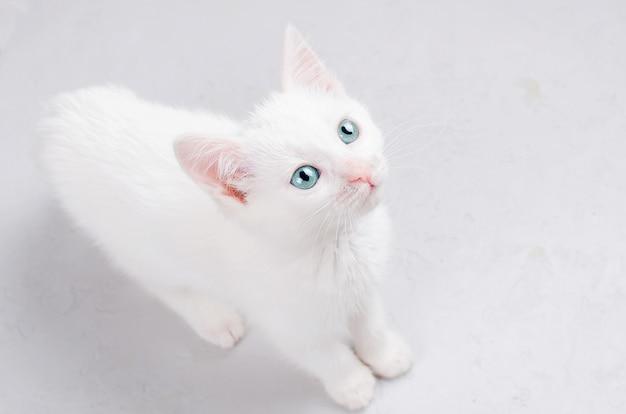 Gatito blanco sobre un fondo blanco