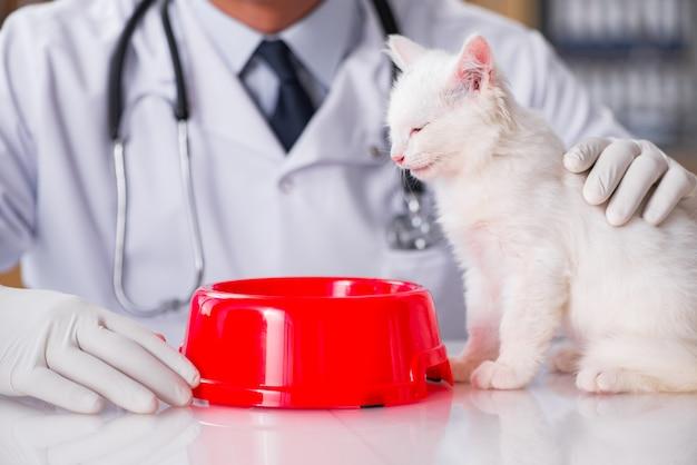 Gatito blanco visitando al veterinario para el chequeo.