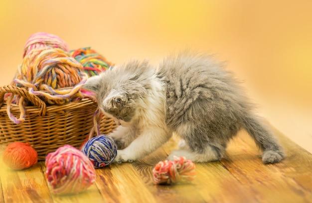 Gatito con bolas de hilo de lana de colores.