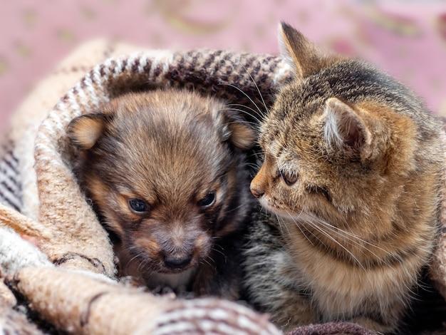El gatito y el cachorro se cubren con una tela escocesa, el gatito y el cachorro se calientan debajo de una manta.