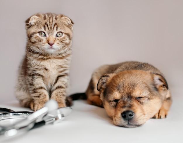 Gatito y cachorro durmiendo en la oficina del veterinario, junto a un estetoscopio