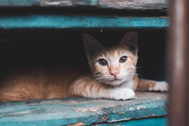 Gatito callejero, gato en la ciudad.
