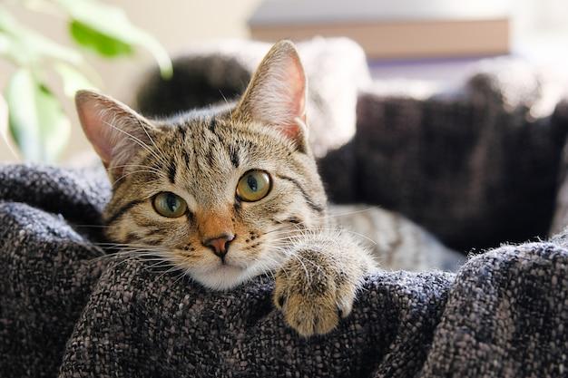 Un gatito callejero con ojos tristes se sienta en una caja.
