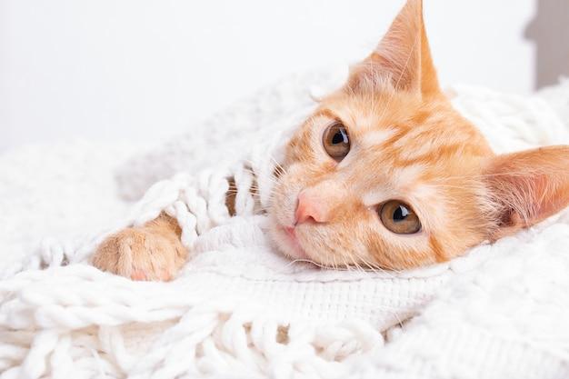 Gatito sin cascar acostado en las pestañas