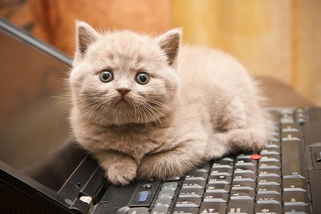 Gatito en una computadora portátil