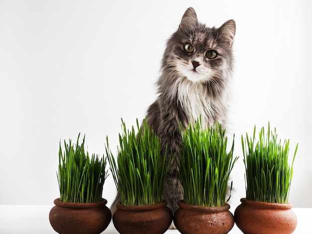 Gatito dulce y hierba verde en macetas.