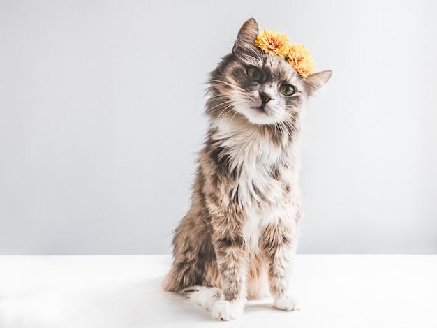 Gatito encantador y esponjoso con flores amarillas.