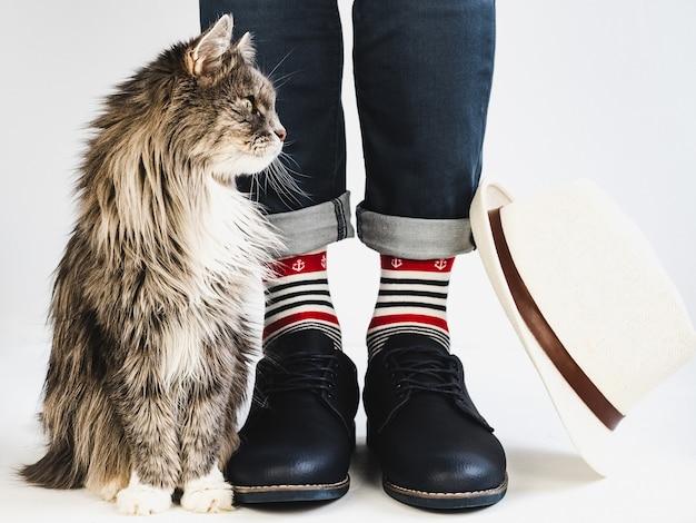 Gatito encantador, piernas de hombre, calcetines brillantes y multicolores.
