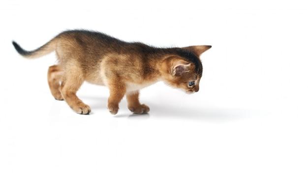 El gatito se escabulle