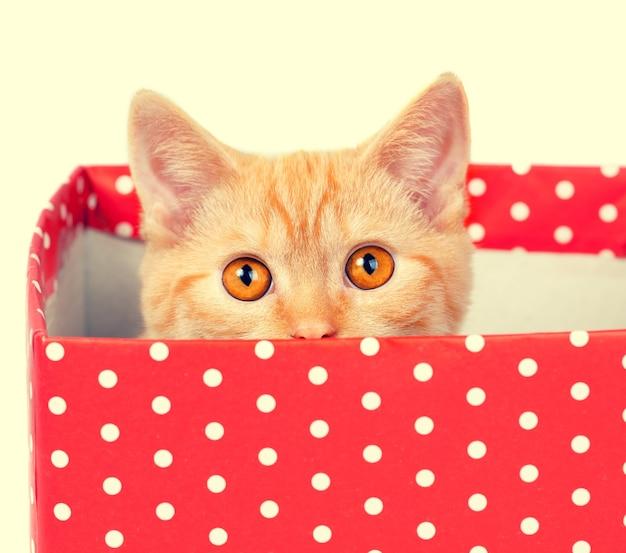 Gatito escondido en una caja con lunares