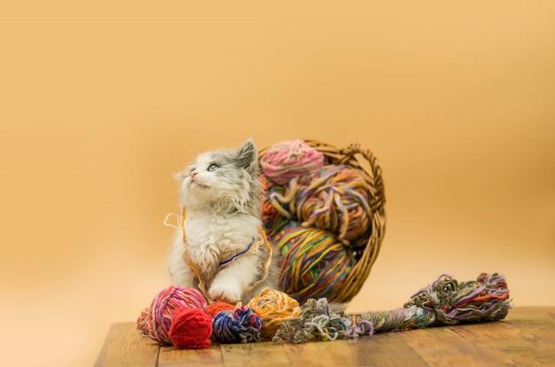 Gatito gracioso al lado de una bola de hilo.