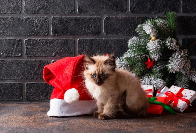 Gatito gracioso cerca del sombrero de santa