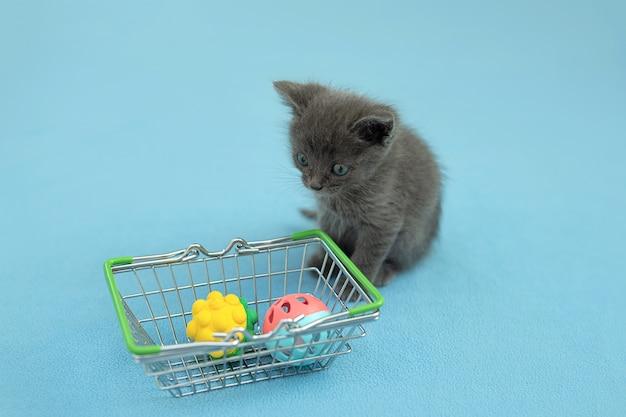Gatito gris con juguete para mascotas una cesta de la compra. comprar animales. tienda de mascotas, mercado de mascotas.