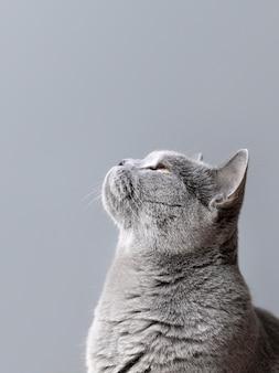 Gatito gris con pared monocromática detrás de ella