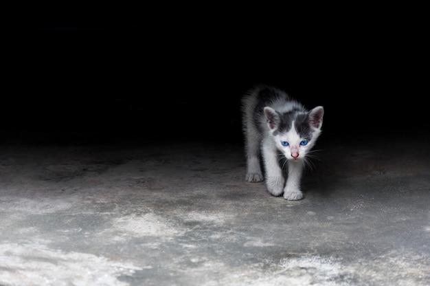 Gatito con hermosos ojos azules, retrato de animal, gato juguetón, vacaciones relajantes