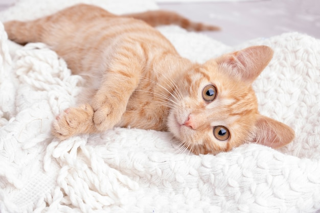 Gatito jengibre acostado sobre una manta