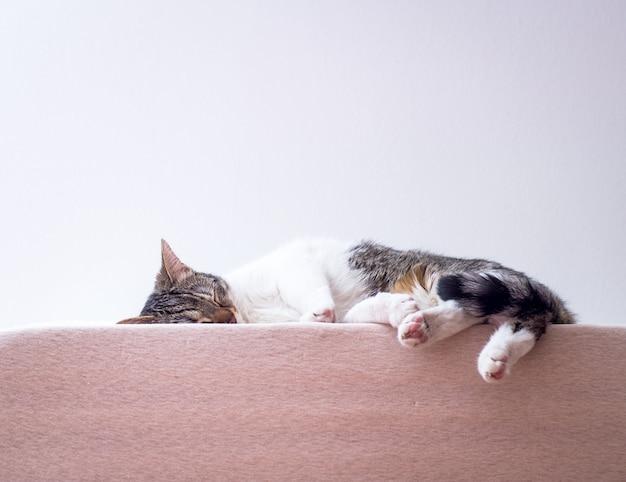 Gatito lindo que duerme en el colchón en casa