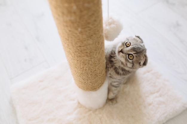 Gatito mirando bola