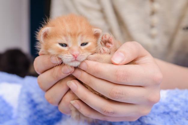 El gatito naranja en sus manos.