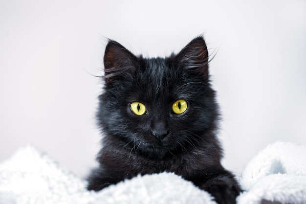 Un gatito negro yace en el sofá horizontal.