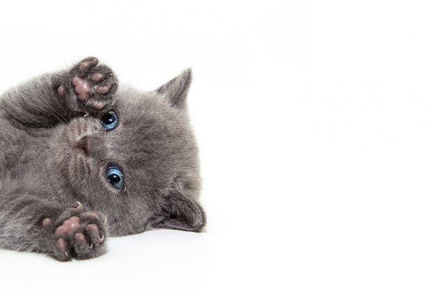 Gatito con patas levantadas