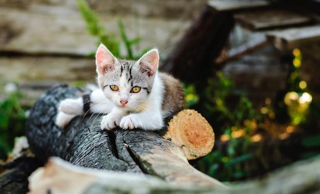 Gatito en el patio bajo el sol