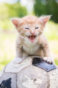 Gatito con una pelota de fútbol