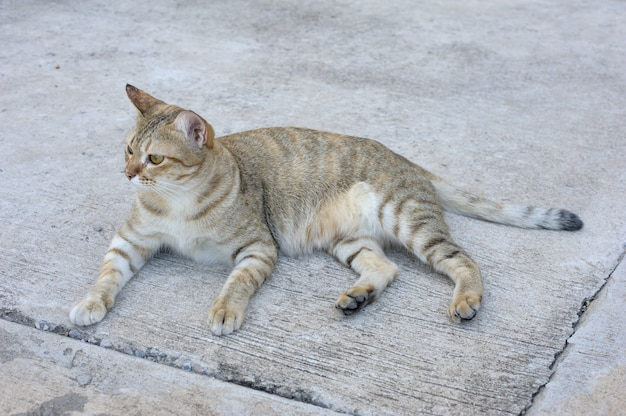 Gatito en el piso