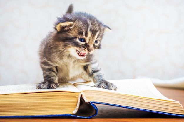 Un gatito rayado con ojos azules se sienta en un libro. un niño con un libro. el niño aprende a leer