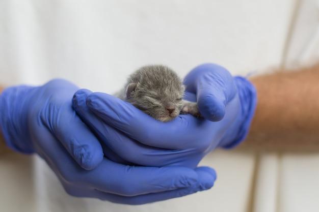 Gatito recién nacido en la mano. un pequeño gato ciego en manos cariñosas.